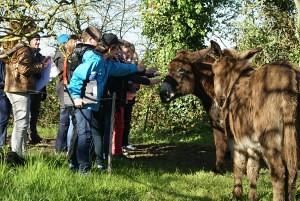 L'attirance pour les ânes