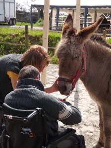 Médiation animale à Saint Fiacre, les ânes de Min Guen