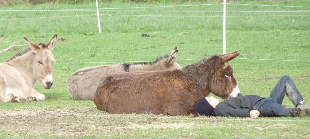 Séance de médiation animale à Saint Fiacre aux ânes de min guen