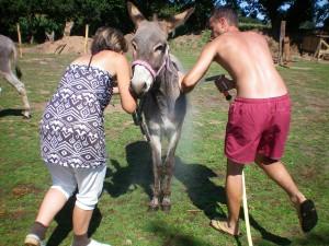 Sylvie et Jacky aux petits soins des ânes de Min Guen
