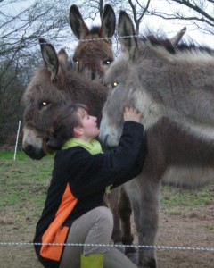 Médiation animale avec les ânes