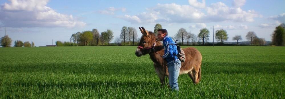 Randonnée dans les champs avec les ânes de Saint Fiacre