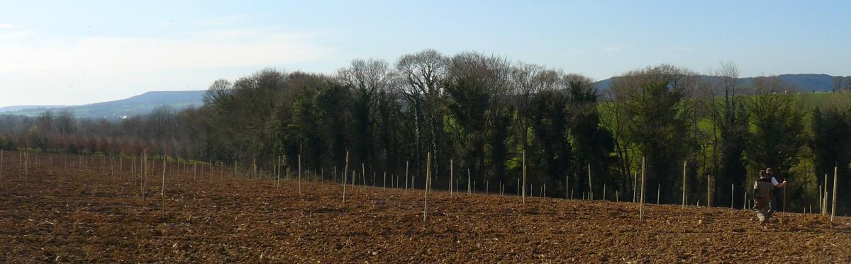 Le verger juste planté (mars 2014)